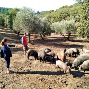Iberian ham tour Cadiz Seville square