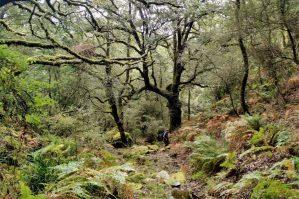 Ruta privada senderismo los alcornocales Cádiz España hiking tours Cadiz Los Alcornocales natural park